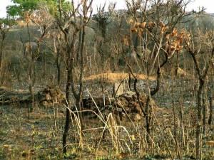 Tumbas improvisadas en Angola